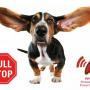 Patento Pet DOG-e-walk