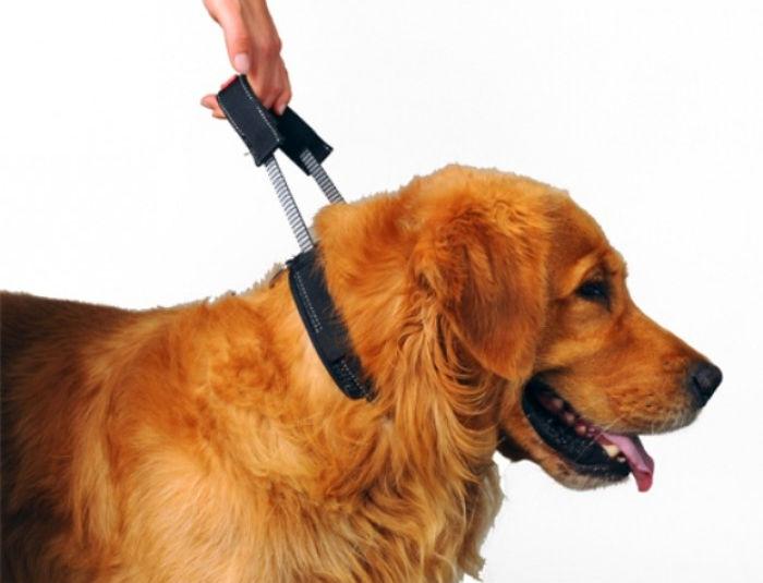 Patento Pet Sport collar